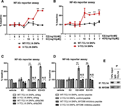 tcl1a single nucleotide polymorphisms and estrogen mediated toll