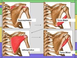 Rotator Cuff Injury From Bench Press Shoulder 3 1