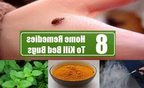 natural bed bug remedies 8 home remedies to kill bed bugs search home remedy with