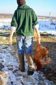 essential chicken butchering supplies checklist reformation acres