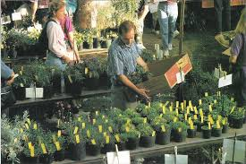 california native plants for sale ipm reduces pesticide use in the nursery california agriculture