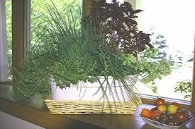 herbs indoors how to grow herbs indoors during winter csmonitor com