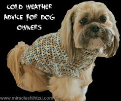 shih pooh haircut cold weather advice for shih tzu lovers
