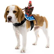 pet costume halloween small dog halloween costumes u2013 festival collections