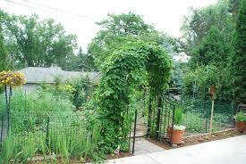 grow a flavorful landscape stark bro u0027s