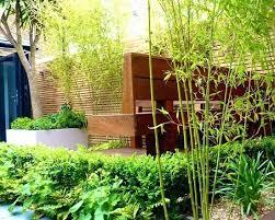 Bamboo Garden Design Ideas Bamboo Landscape Ideas Privacy Hedges Bamboo Yard Ideas Mreza Club