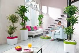 feng shui plants for harmony and positive energy in the living