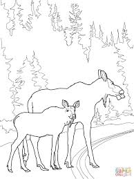 moose cow with calf crossing the road coloring page free