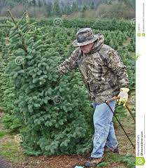 man cutting down a christmas tree stock photos image 11939513