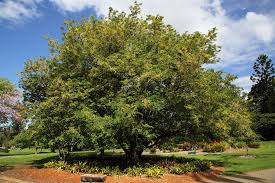 Botanic Gardens Brisbane City Point Of Interest M On City Botanic Gardens Self Guided Wa Flickr