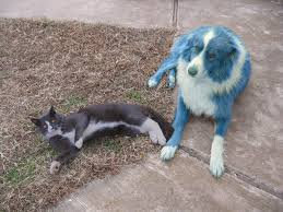 c c australian shepherds louisiana kitty reporter u0027s blog cat u0027s meaow topics news politics