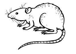 coloring pages amusing rat coloring pages img jpg size