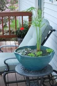 balkon bewã sserungssystem ein über exotische pflanzen die durch entnahme ihrer kerne