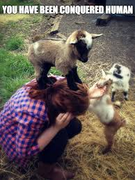 Billy Goat Meme - goat meme weknowmemes