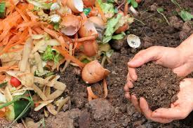 wood ash fertilizer should i put ashes in my garden