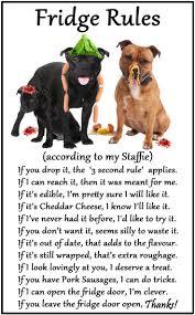 american pitbull terrier uk law the 25 best staffordshire bull terrier ideas on pinterest