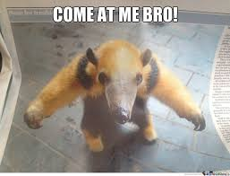 Anteater Meme - anteater memes best collection of funny anteater pictures