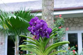 Tropical Plants Pictures - the 15 best botanical gardens in florida proflowers blog