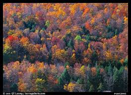 picture photo hillside trees colorful fall foliage