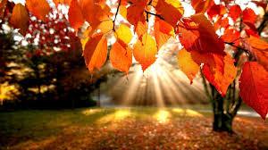 fall pumpkin wallpapers android wallpaper autumn colors