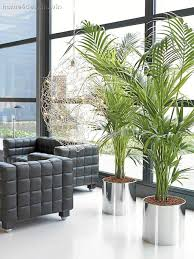 Decorative Plants For Home Living Room Transitional Design In Home Plants Fabulous Plants