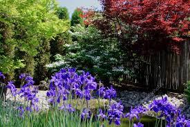 colourful corner of japanese garden u2014 stock photo morning light