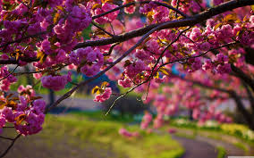 nature wallpaper with spring flowers hd wallpapers wallpapers