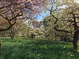 bodnant gardens wales in spring haute couture u2013 susan rushton