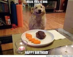 Happy Birthday Meme Dog - https i pinimg com 736x 6f 59 55 6f59556a43b2952