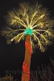 palm tree christmas tree lights the goat potd palm tree lights