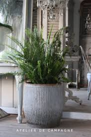 Fern Decor by 25 Best Christmas Fern Ideas On Pinterest Evergreen Ferns