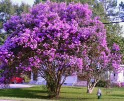 Pruning Spring Flowering Shrubs Home Design Inspirations