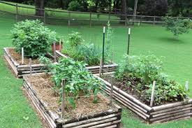 how to start a vegetable garden for beginners how to start your own sustainable vegetable garden american