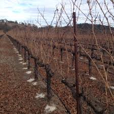 pruning part one pre pruning u2014 walsh vineyards management