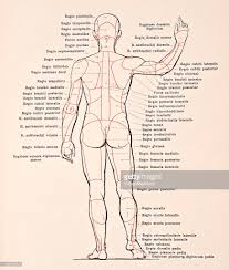 Human Anatomy Atlas Regions Of The Body Ii Pictures Getty Images