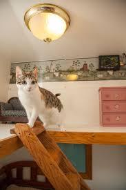 luxury cat boarding at morris animal inn morristown nj