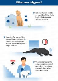 what triggers seizures in dogs canna pet