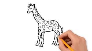 wild animals animals pencil to draw step by step youtube