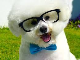 bichon frise dog pictures the 25 best bichon frise ideas on pinterest bichons baby