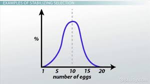 stabilizing selection examples definition u0026 graph video
