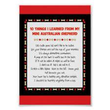 australian shepherd funny australian shepherd posters zazzle