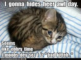 Sad Kitty Meme - list of synonyms and antonyms of the word sad kittens