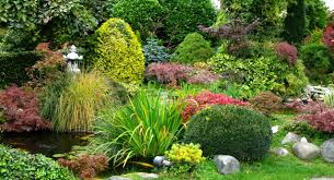 Low Maintenance Plants And Flowers - backyards appealing easy low maintenance backyard landscaping