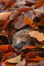 cute baby boy autumn leaves wallpapers best 25 autumn pictures ideas on pinterest autumn fall autumn