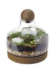 glass u0026 wood terrarium large gardener u0027s supply