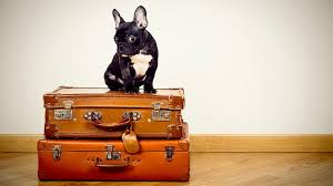 traveling with pets images Traveling with pets infographic jpg