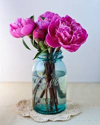 a flower you shouldn t erin b peony ant and flower
