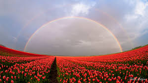 Tulip Field Rainbows U0026 Tulip Fields Opod