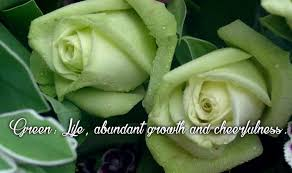 happy green color happy rose day 2016 importance and significance of each rose colour