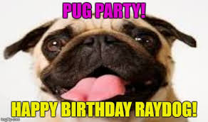 Pug Birthday Meme - happy birthday to raydog imgflip